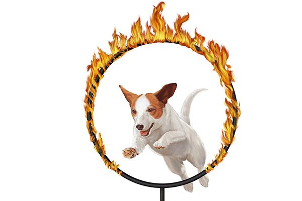 Dog Jumping Through Hoop Clip Art Car Pictures
