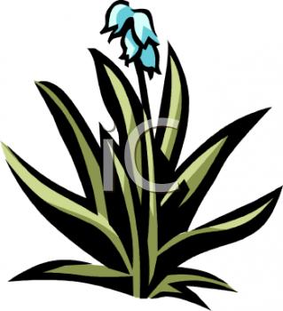 0511 0902 2720 1730 Blue Hyacinth Clipart Image Jpg