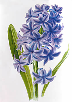 Below Are Types Of Grape Hyacinths
