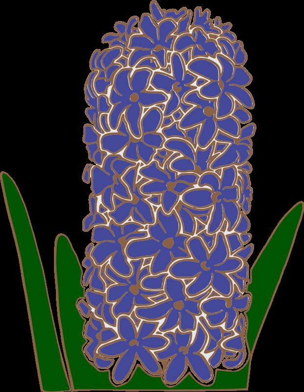 Clipart   Hyacinth