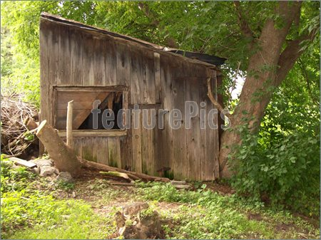 The Old Shed Picture