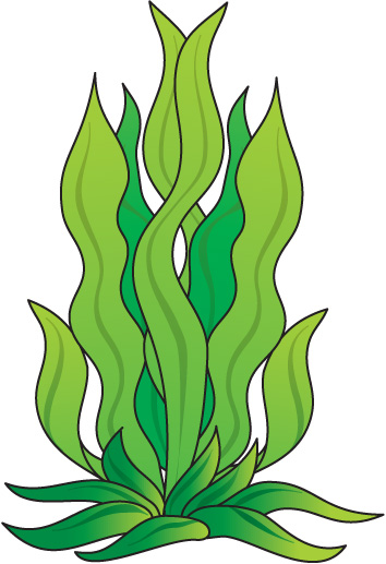 How To Draw Seaweed   Clipart Best