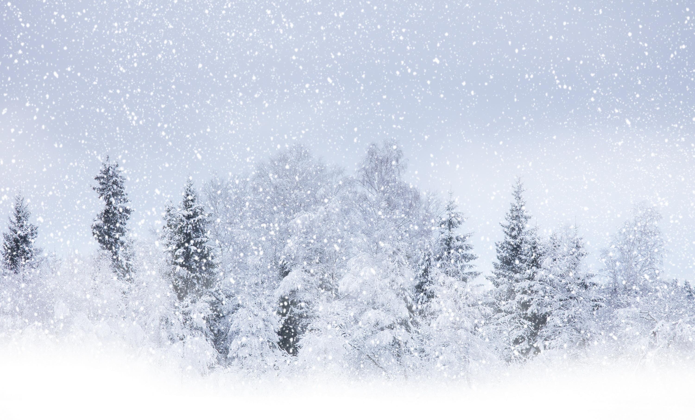 Wallpaper Winter Snow Tree Blizzard Snowstorm Desktop Wallpaper