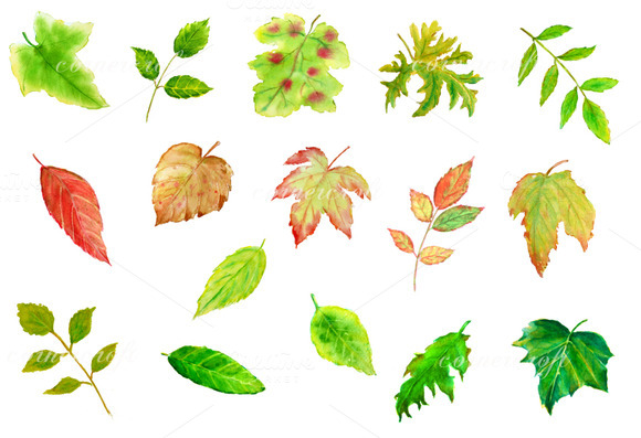 Watercolor Leaves Clipart   Objects On Creative Market
