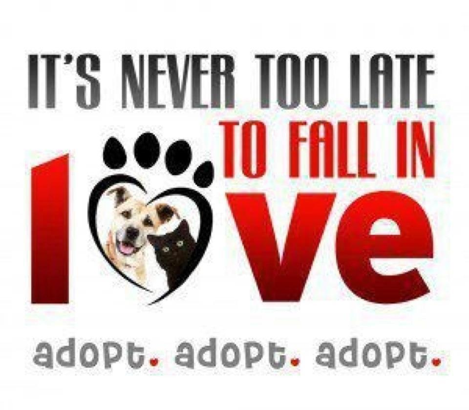 How can you adopt a rescue pet?