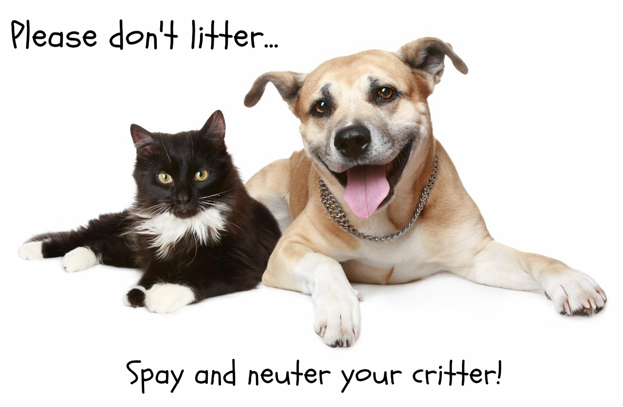Benefits Of Spaying And Neutering Your Pets