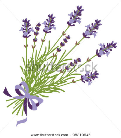 Lavender Bundle Clipart Lavender Stock Vector