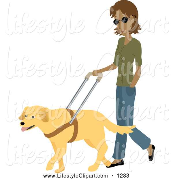 Of A Blind Hispanic Woman Strolling With A Yellow Labrador Guide Dog