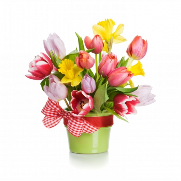 Pictures Of Tulips Spring Flowers   Elsoar