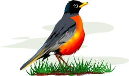 Red Robin Clipart - Clipart Kid