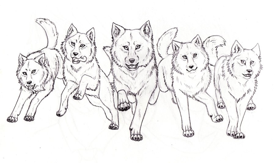 Image Gallery Wolfpack Cartoon Wolf Pack Coloring Pages