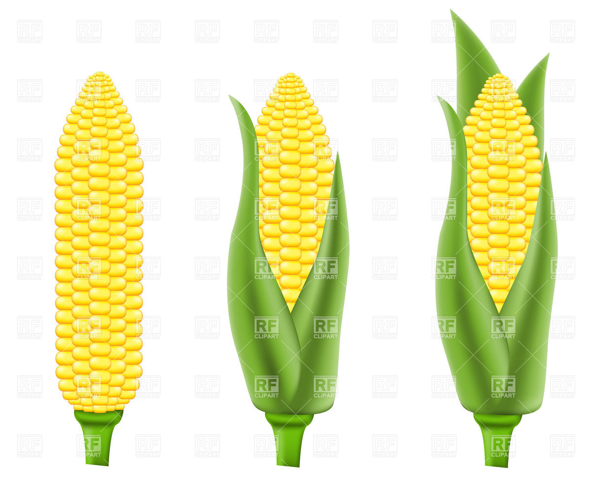 And Beverages   Corn  Maize  Download Royalty Free Vector Clipart