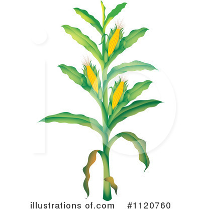 Corn Clipart  1120760   Illustration By Colematt