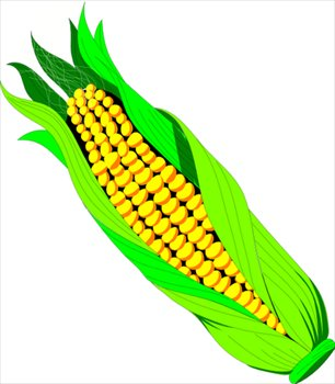 Free Ear Of Corn Clipart   Free Clipart Graphics Images And Photos