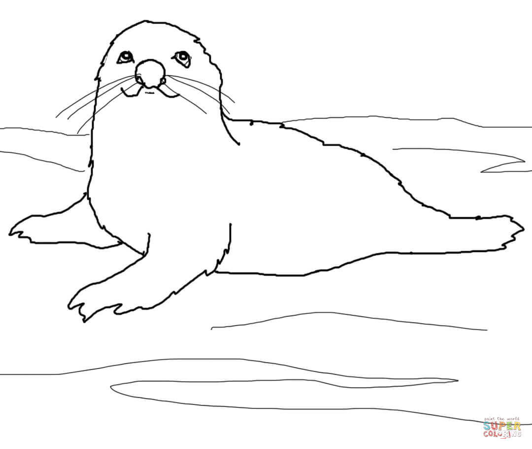Click The Baby Harp Seal Coloring Page To View Printable Version Or