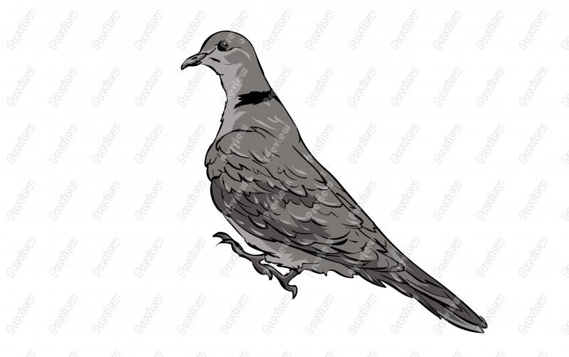 Ringed Turtle Dove Bird Character Clip Art   Royalty Free Clipart