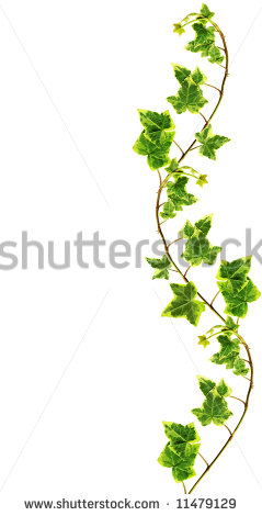 Ivy Vines Clip Art Border Made Of Green Ivy