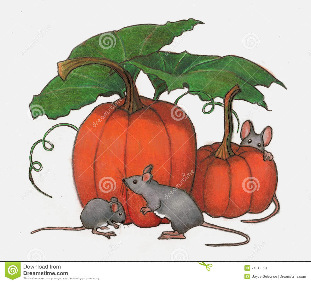 Mice Playing In Pumpkin Patch  Color Pencil Art Stock Image   Image