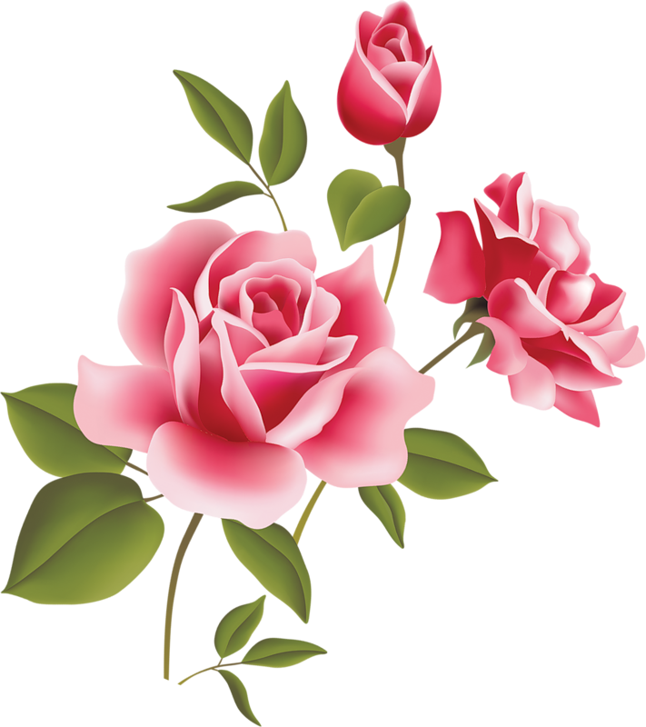 Pink Rose Clip Art 7takyynqc Png