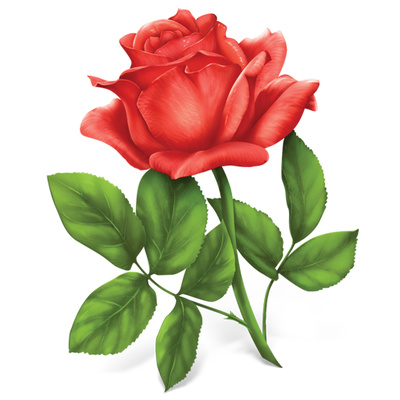 Rose Illustration Single Red Rose Clipart   Just Free Image Download