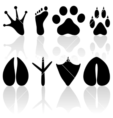 Cow Footprint Footprint Collection Vector