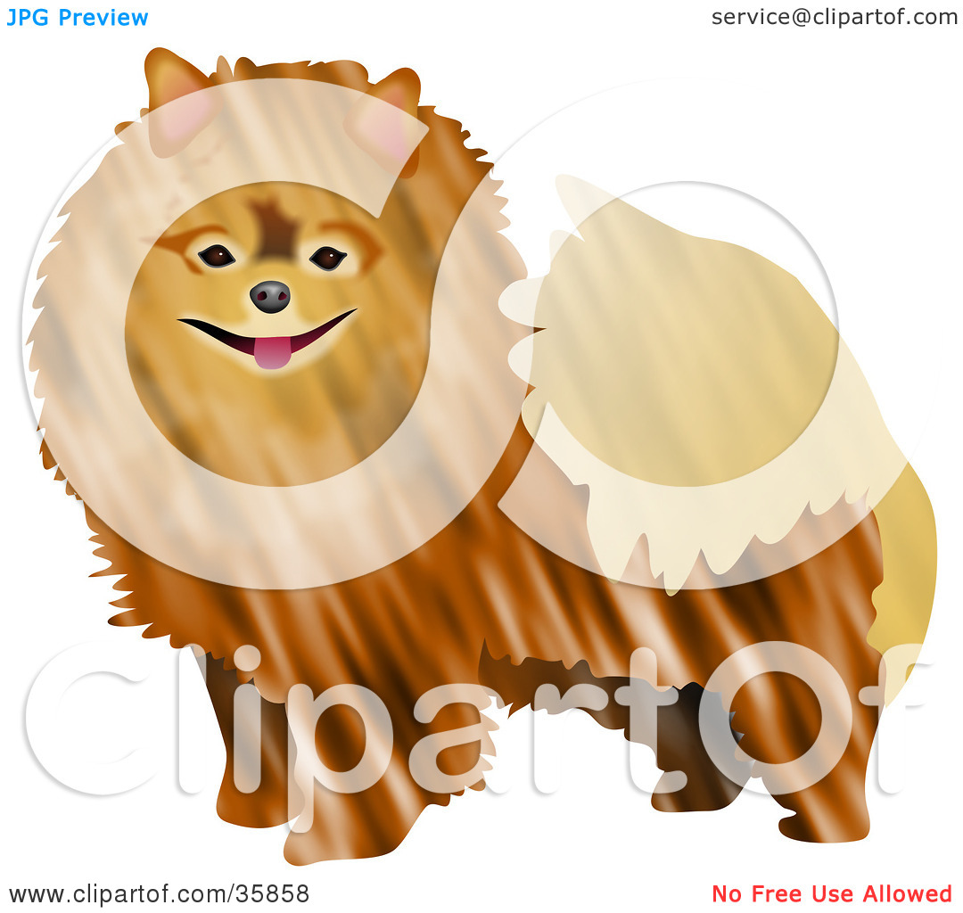 Pomeranian Clipart Clipart Illustration Of A