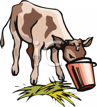 Animal Clipart Net Clipart Picture Of A Cow Eating Out Of A Bucket