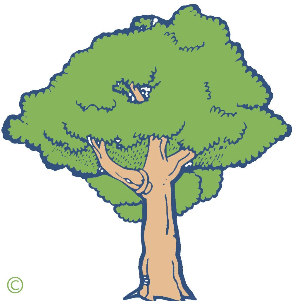 Mango Tree Clipart - Clipart Kid