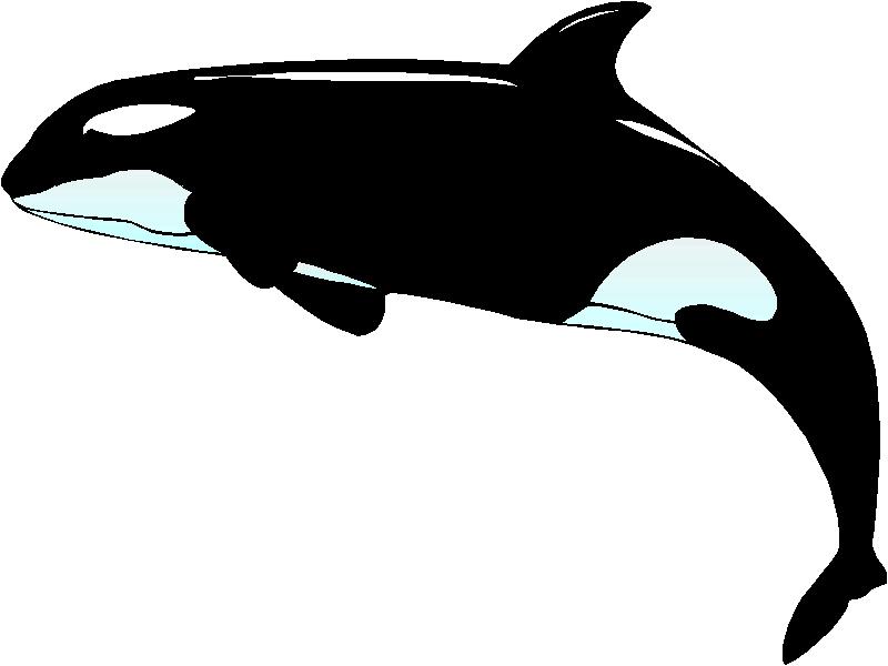 Clip Art Killer Whale Clipart orca whale clipart kid clipart