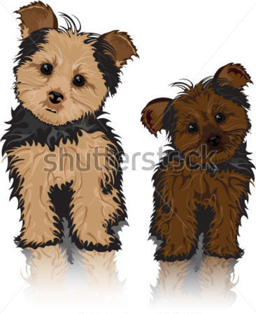 Download Source File Browse   Animals   Wildlife   Yorkie Cute Dogs