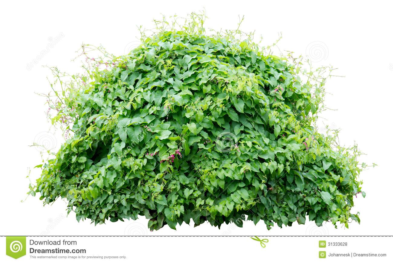 Green Bush Clipart - Clipart Suggest