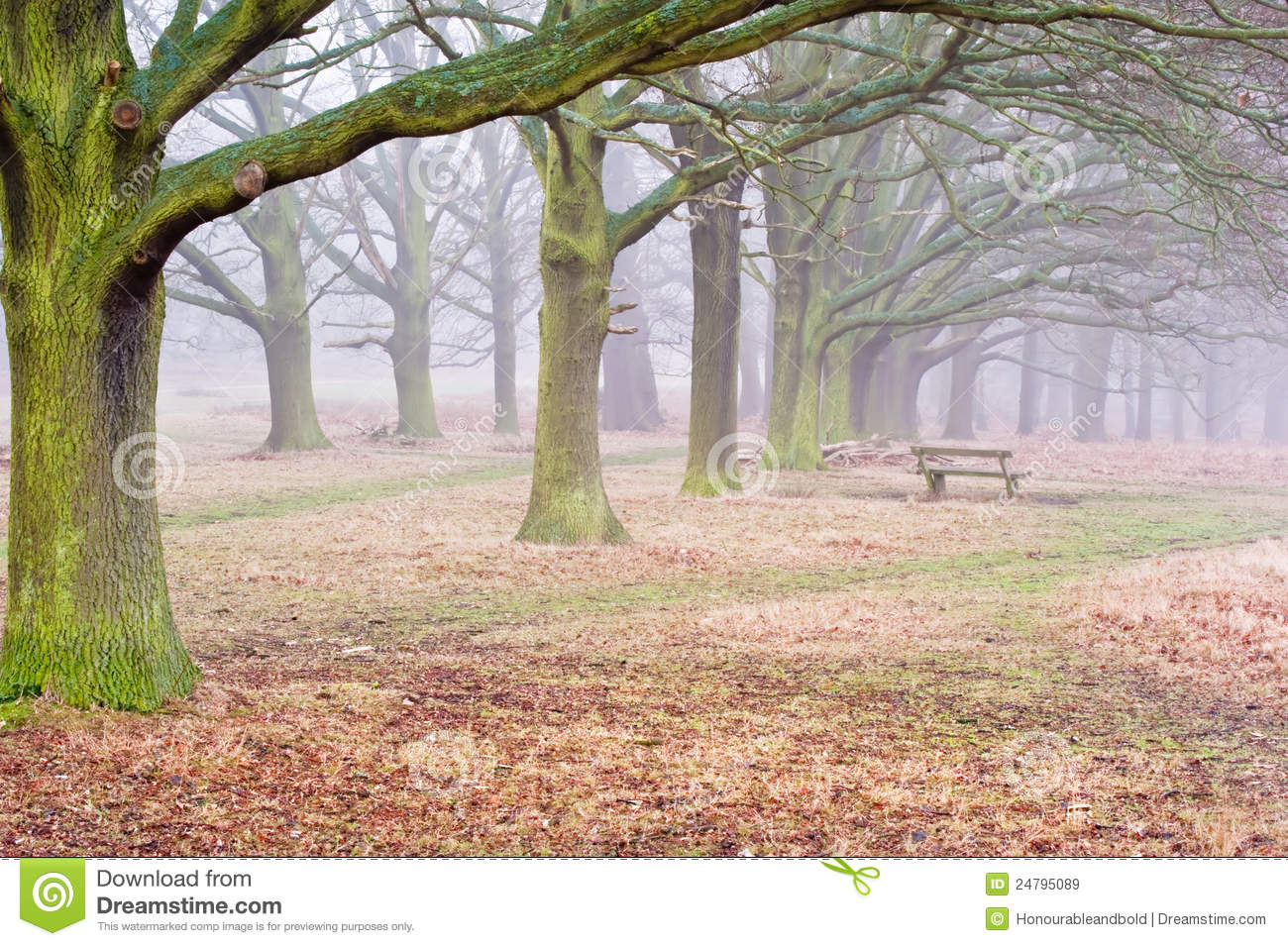 Fall Foggy Landscape Of Forest Royalty Free Stock Images   Image