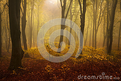 Fog In The Forest During Autumn And Red Leaves On The Ground