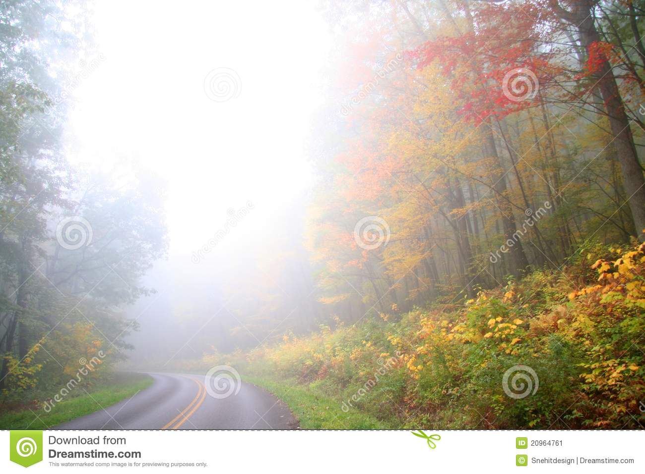 Foggy Autumn Scene Stock Image   Image  20964761