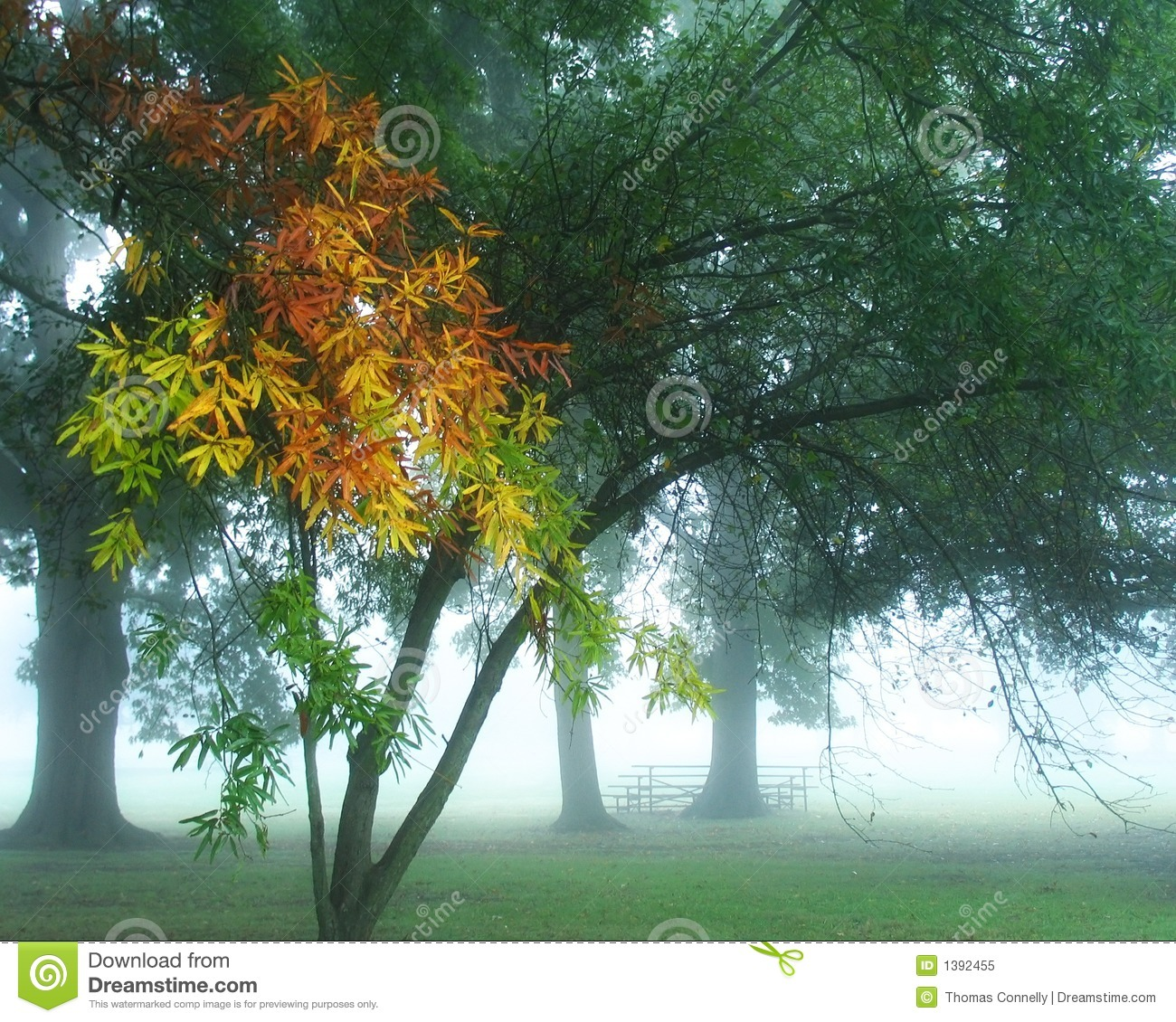Foggy Fall Morning Royalty Free Stock Photo   Image  1392455