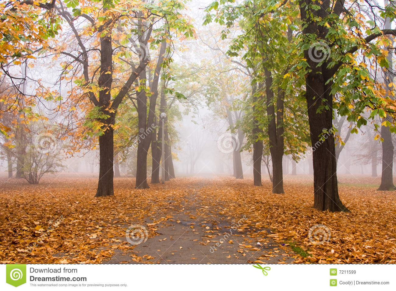 Foggy Fall Royalty Free Stock Images   Image  7211599
