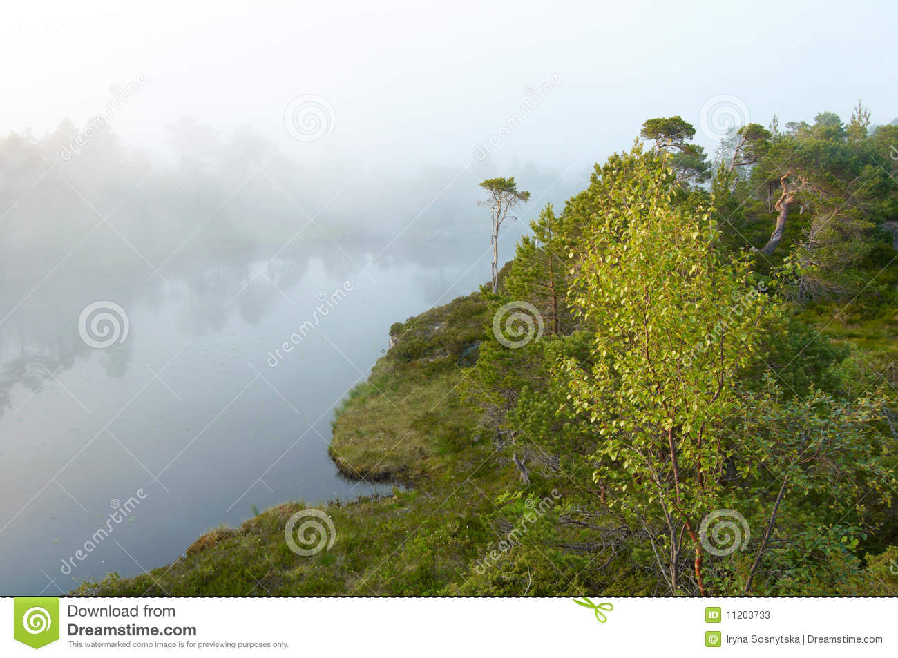 Foggy Forest Stock Photos   Image  11203733