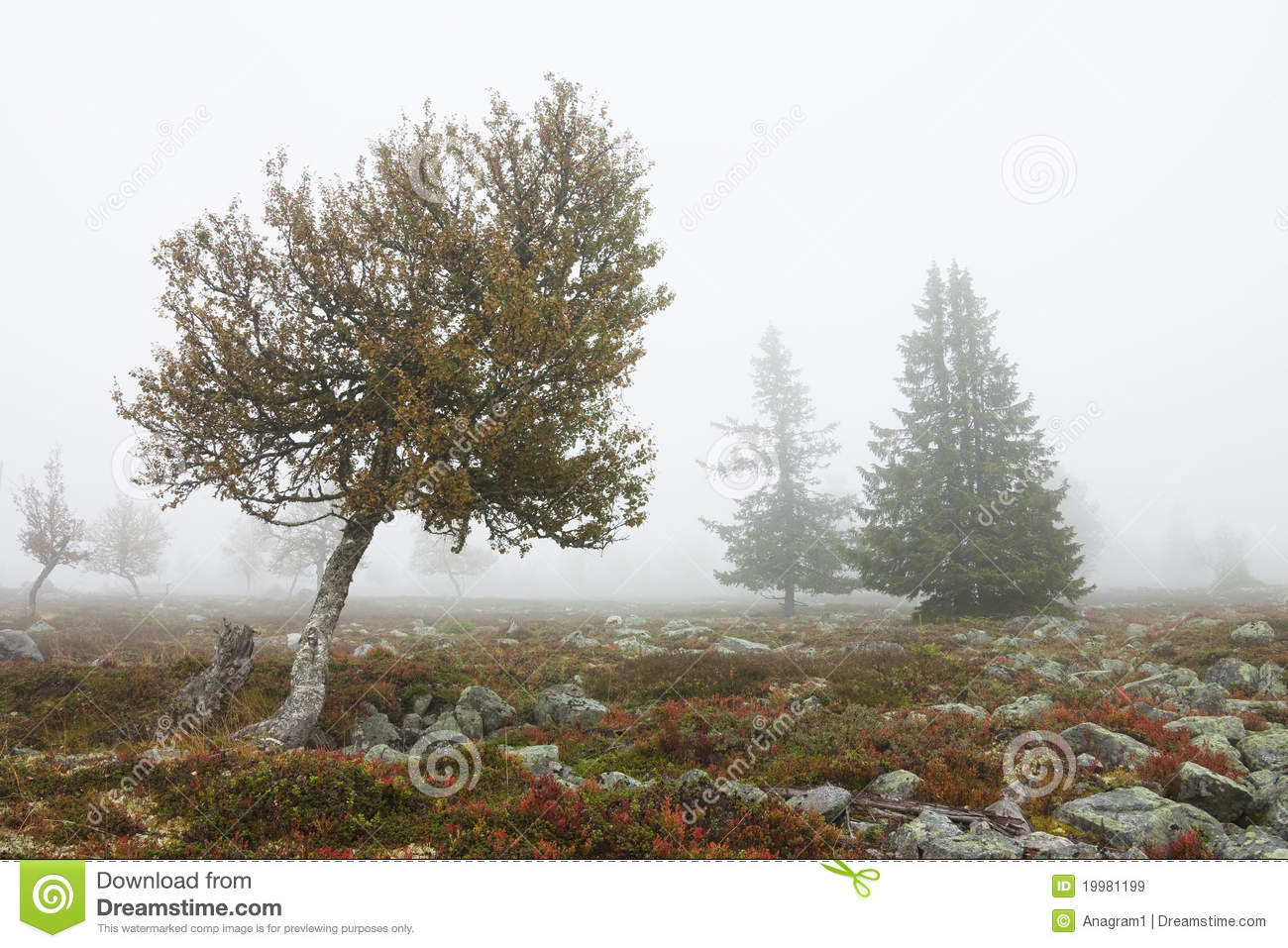 Foggy Landscape With Trees In Fall Royalty Free Stock Images   Image