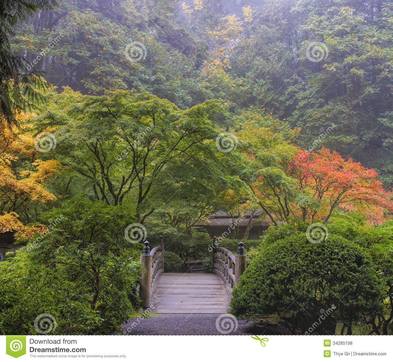 Foggy Morning In Japanese Garden With Wooden Foot Bridge During Fall