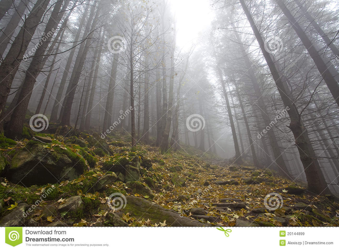 Foggy Mystery Forest With Trees In Fall Royalty Free Stock Images