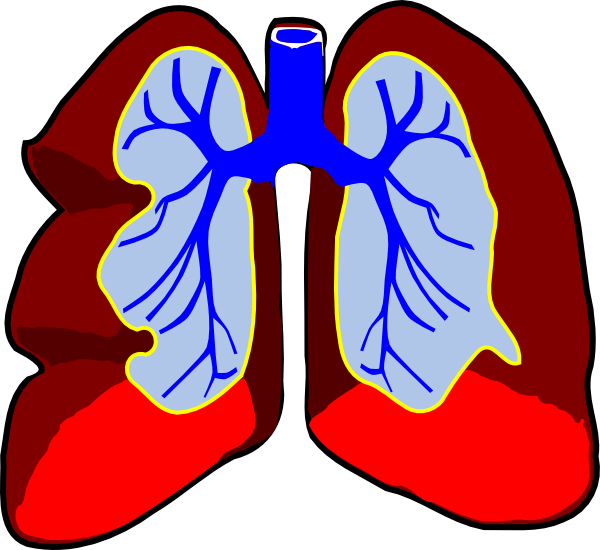 Lungs Clip Art At Clker Com   Vector Clip Art Online Royalty Free