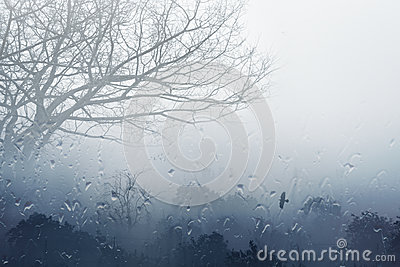 Moody Grey Fall Background   Trees In Fog Rainy Day Foggy Day