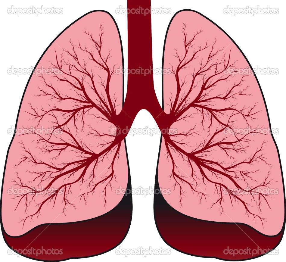 Image Gallery healthy lungs cartoon