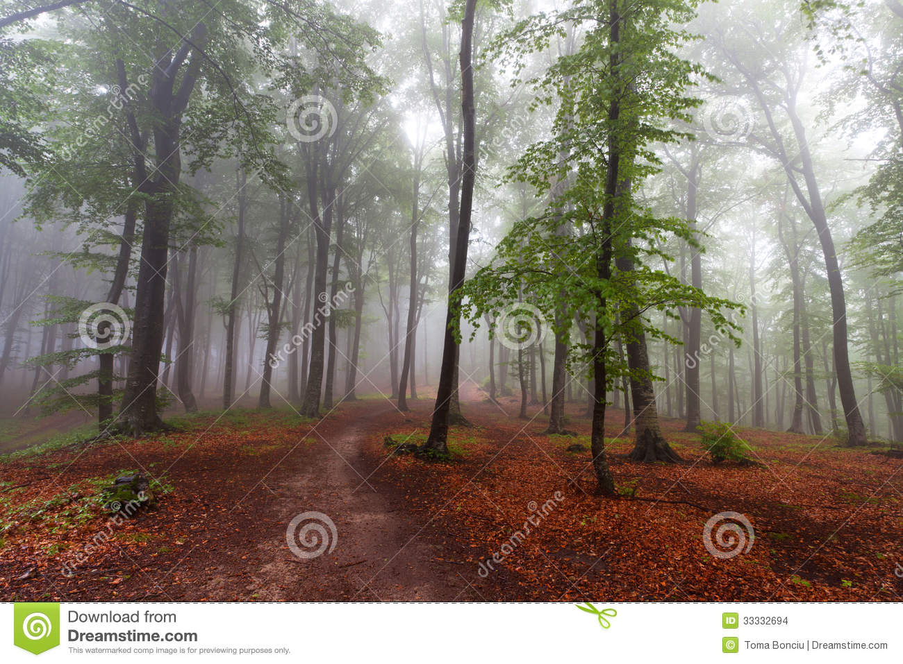 The Beginning Of Autumn  Fall  During A Foggy Day In The Forest  A