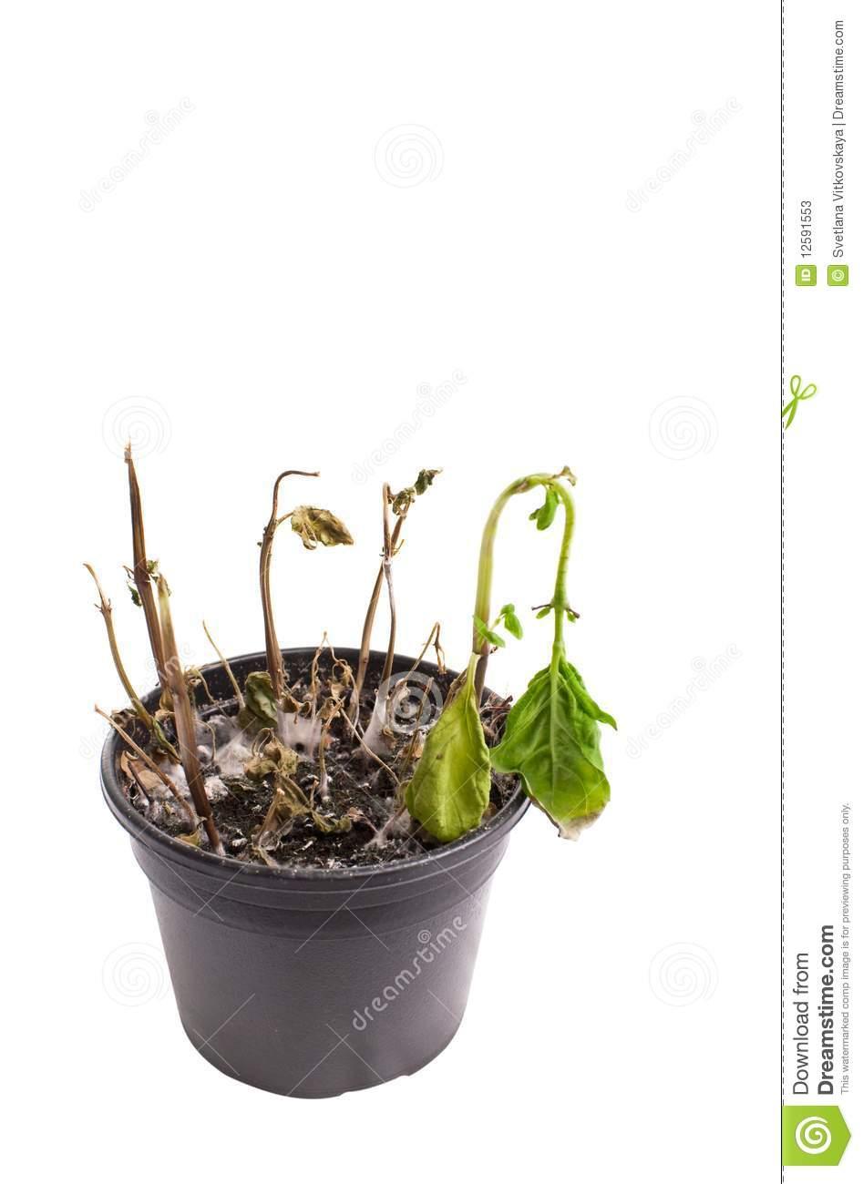 Dead Plant Clipart - Clipart Kid