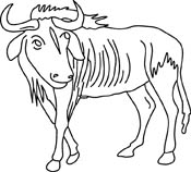 Gnu Wildebeest Pictures   Graphics   Illustrations   Clipart   Photos