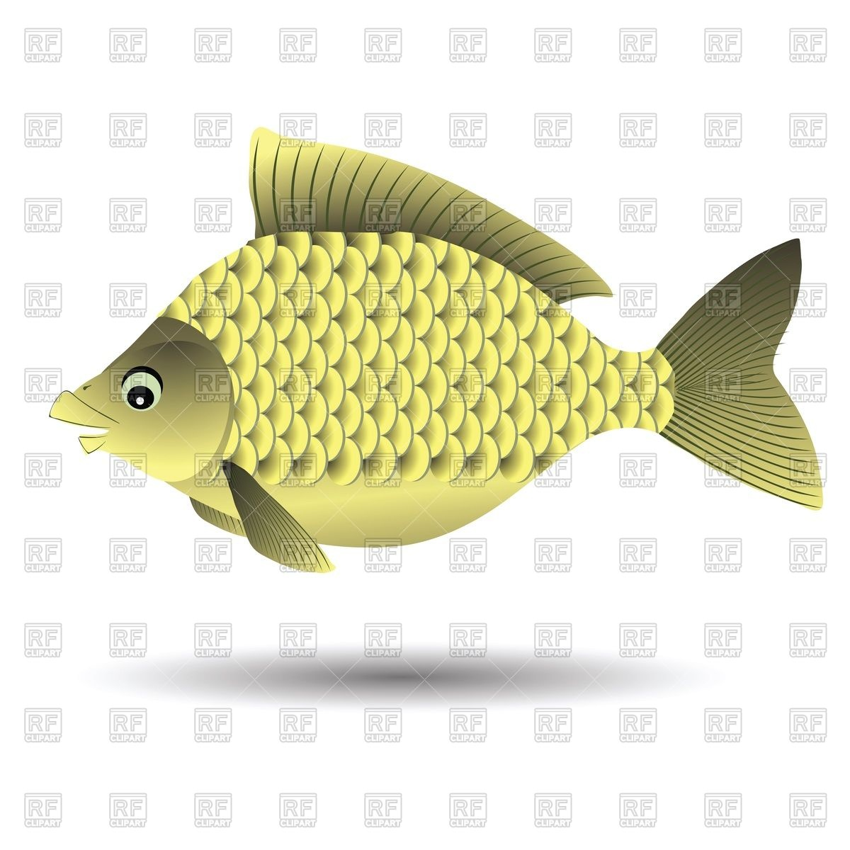 River Fish  Crucian  Isolated On White Download Royalty Free Vector