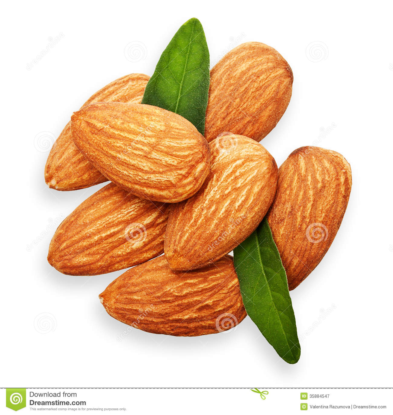 almond clipart clipart suggest
