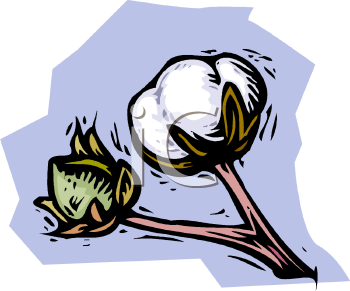 Cotton Clipart 0511 1006 2915 1951 Cotton Boll Ready To Be Picked