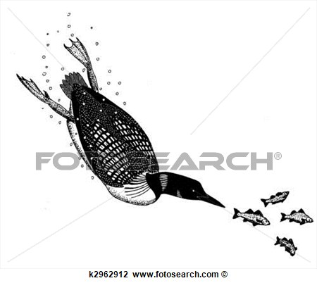 Clip Art   Common Loon  Fotosearch   Search Clipart Illustration
